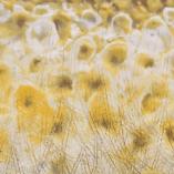 Картина Капли солнца Восковая живопись Энкаустика Абстракция Фактурная живопись